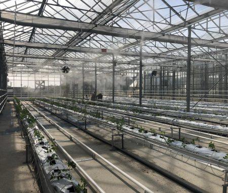 istanbul-yildiz-teknik-uni-hydroponic-greenhouse3