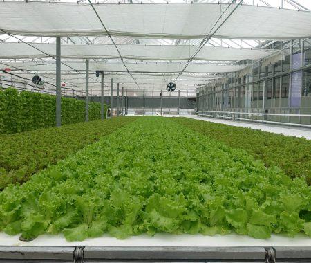 istanbul-yildiz-teknik-uni-hydroponic-greenhouse8
