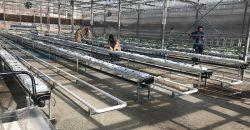 greenhouse-constuling-engineering