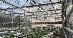 soilless-greenhouse