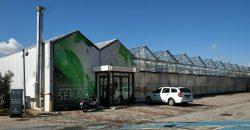 hydroponic greenhouse 2020