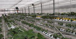 soilless greenhouse 2020