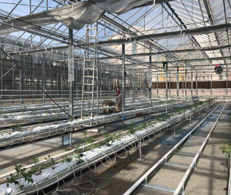 istanbul-yildiz-teknik-uni-hydroponic-greenhouse4