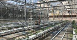 istanbul-yildiz-teknik-uni-hydroponic-greenhouse4-300x225