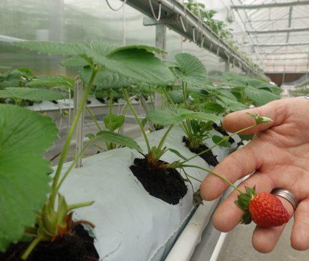 istanbul-yildiz-teknik-uni-hydroponic-greenhouse7