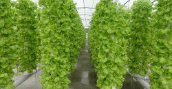 istanbul-yildiz-teknik-uni-hydroponic-greenhouse9